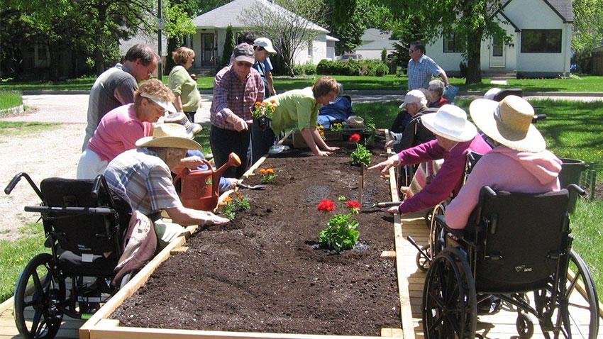 باغبانی برای سالمندان با محدودیت حرکتی