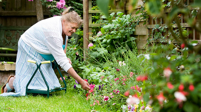 باغبانی باعث افزایش تحرک در سالمندان